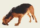 Ищейка
